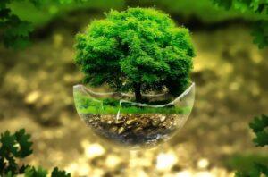 Environmental Links
